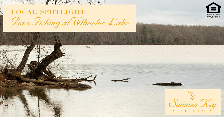 bass fishing at Wheeler Lake