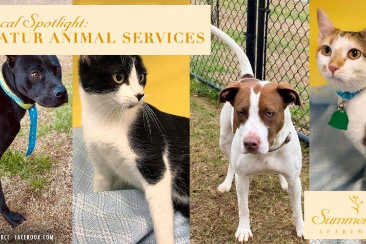 Local Spotlight: Decatur Animal Services